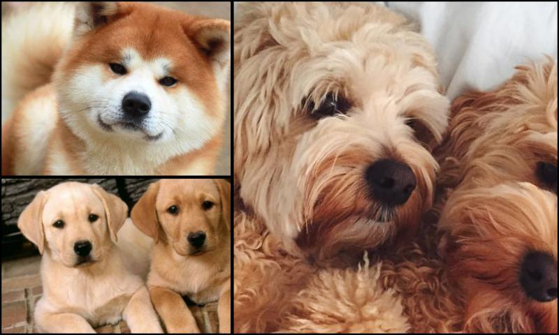 Yavru Köpeklerin Davranışları Nasıldır?