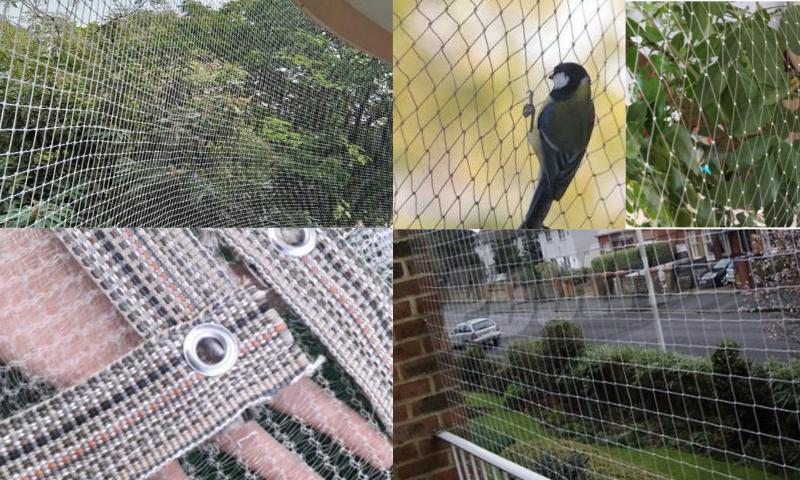 Kuş Filesinin Özellikleri