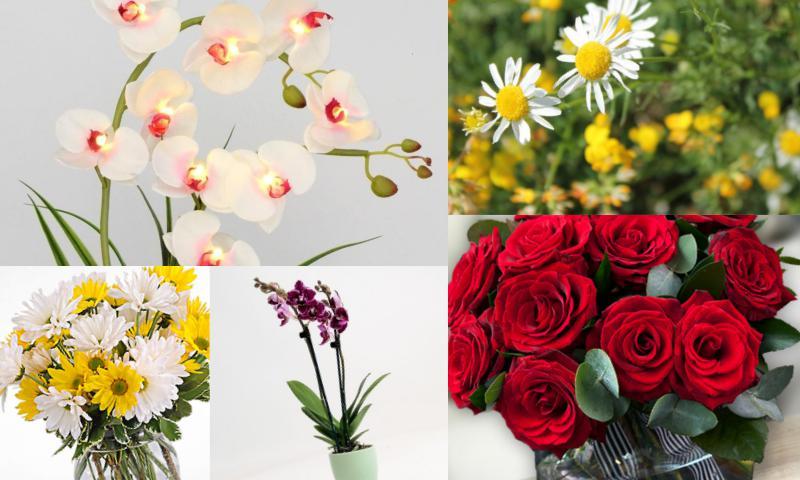 Özel Günlerin Vazgeçilmez Hediyesi Orkideler